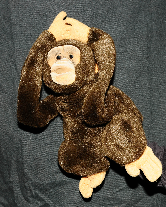 coco, le singe de la sorciere